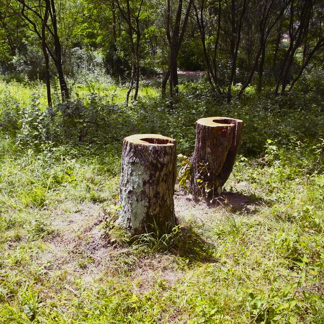 Youki Hirakawa - A tree two stumps – Chestnut - ph. E. Milanesi - courtesy Case Sparse