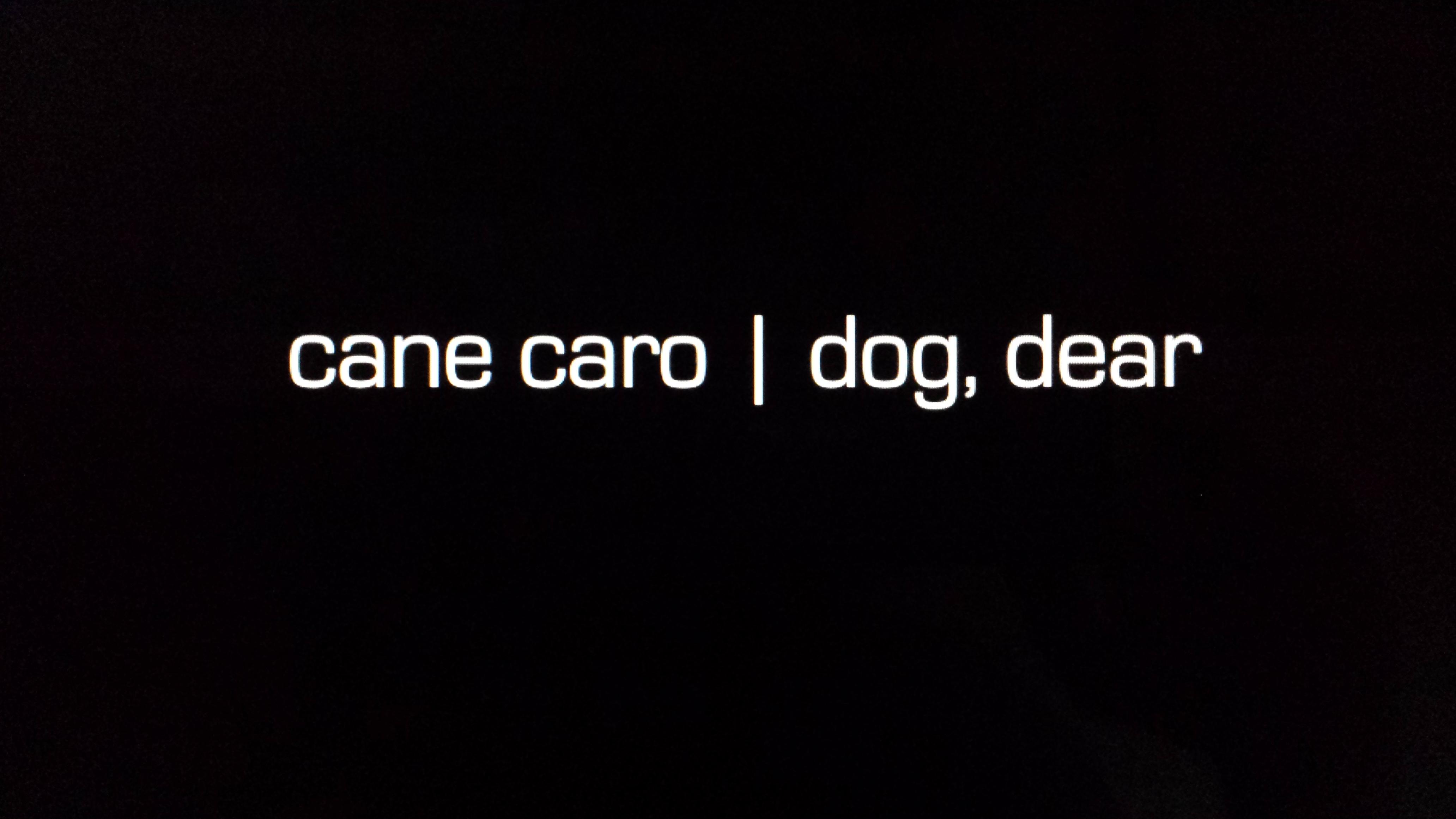 dog dear 0