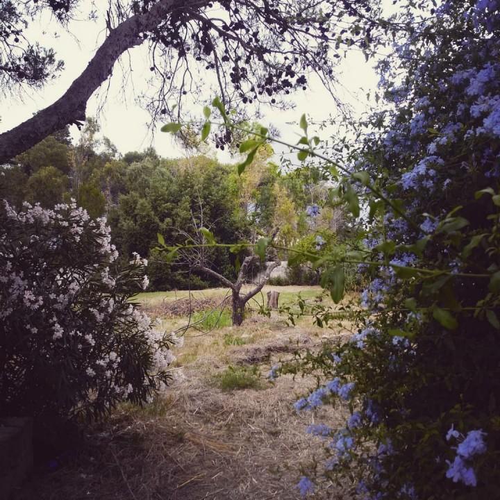 Giardino, foto di Francesco Lauretta